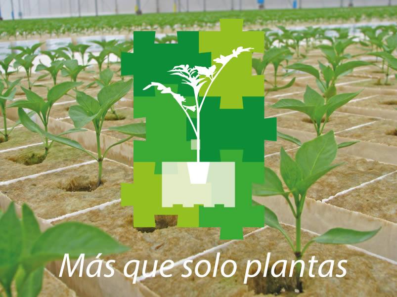COLABORADORES-PLANTANOVA-PLANTULA-DE-PIMIENTO