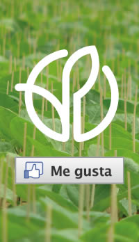 PLANTANOVA-ME-GUSTA-PLANTULA-DE-BERENJENA-INJERTADA
